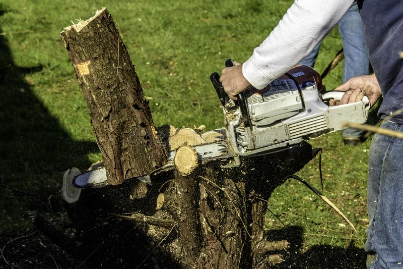 Man cutting tree with gas powered chainsaw royalty free stock images