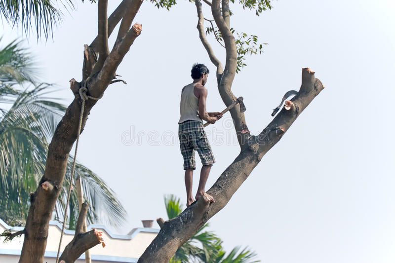 Man cutting a tree. KOLKATA, WEST BENGAL / INDIA - JANUARY 29TH : Unidentified man cutting tree for making space available for urban growth. India is one of the royalty free stock image