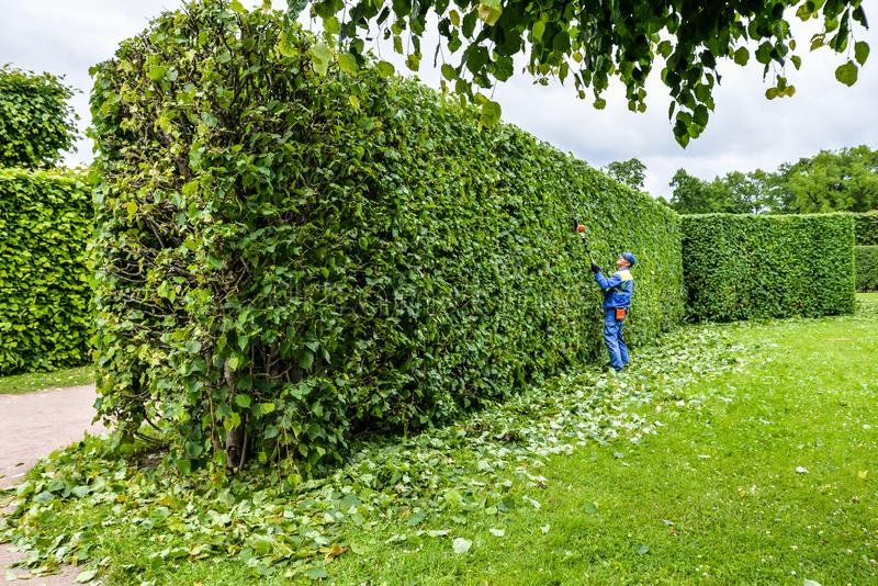 Hedge Trimming Stock Images Download 1 929 Royalty Free