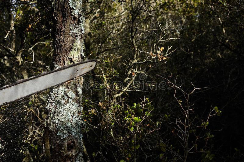 Man cutting trees using an electrical chainsaw in the forest stock photography