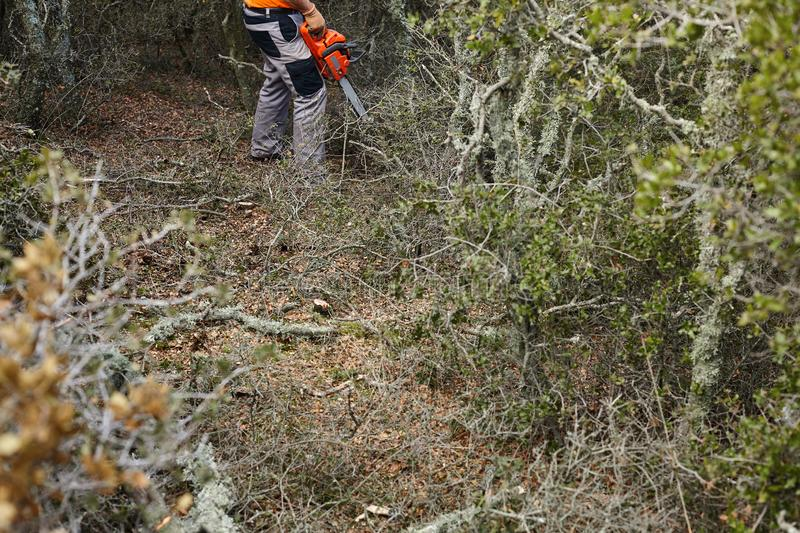 Man cutting trees using an electrical chainsaw in the forest royalty free stock photography