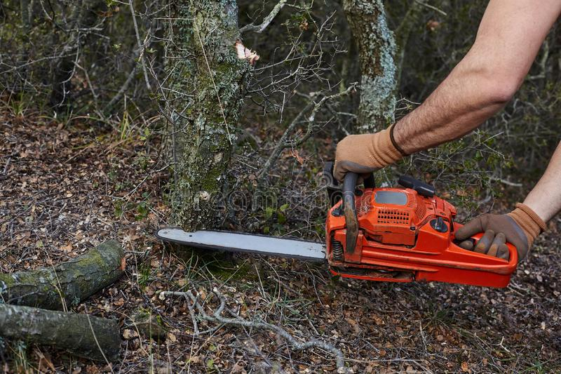 Man cutting trees using an electrical chainsaw in the forest royalty free stock image