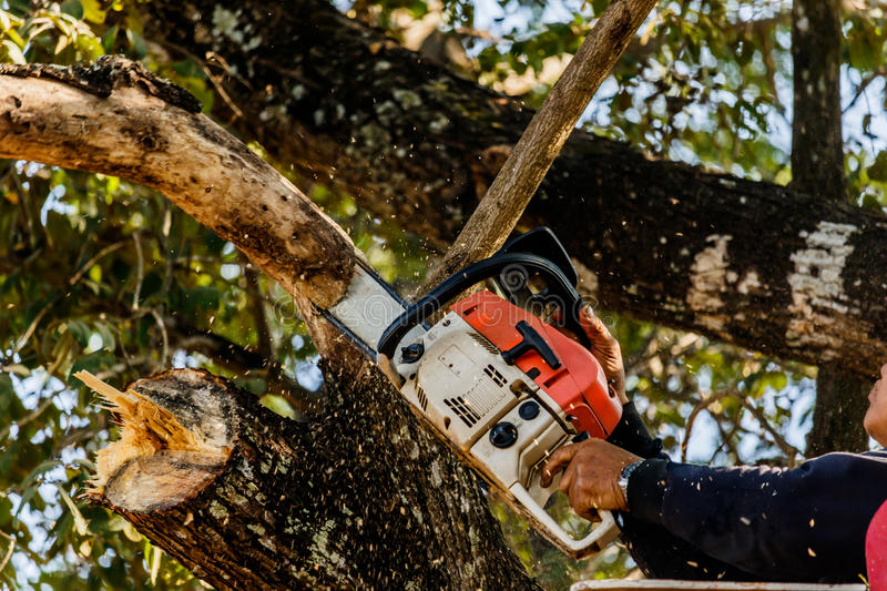 Man cutting trees using an electrical chainsaw and professional stock image