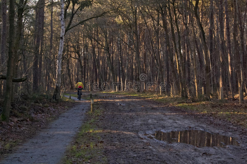 Man cycling in the forest stock images