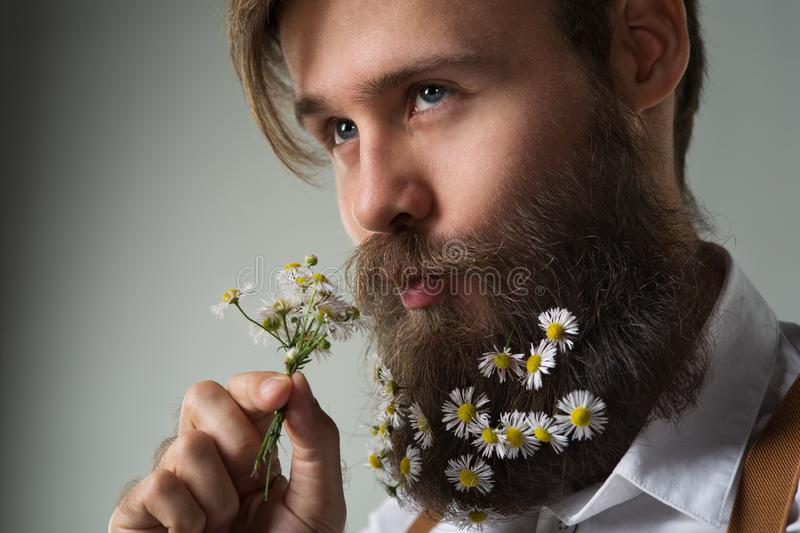 Man with daisy flowers decorated beard in white shirt and suspenders royalty free stock photo