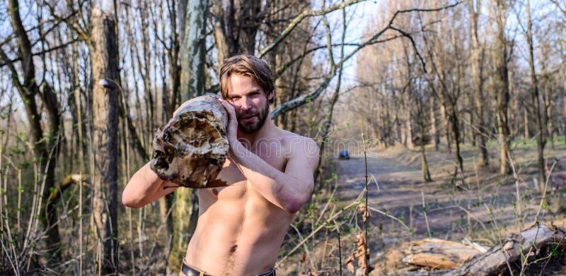 Man den brutala starka attraktiva grabben som samlar trä i sammankomst för torso för för skogskogsarbetare eller skogsarbetare se arkivfoto