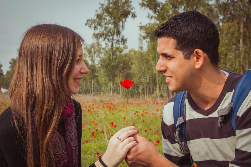 Man die een vrouw enige rode anemoonbloem op anemonengebied geven stock fotografie