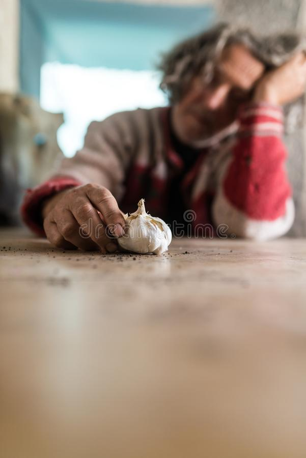 Man with dirty hands holding a bulb of garlic as he sits at table stock image