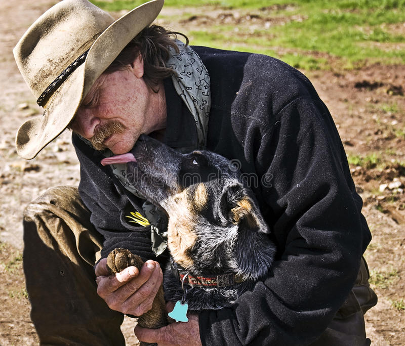 Man and Dog. A cowboy checking his dog's paw and the dog licks him in appreciation