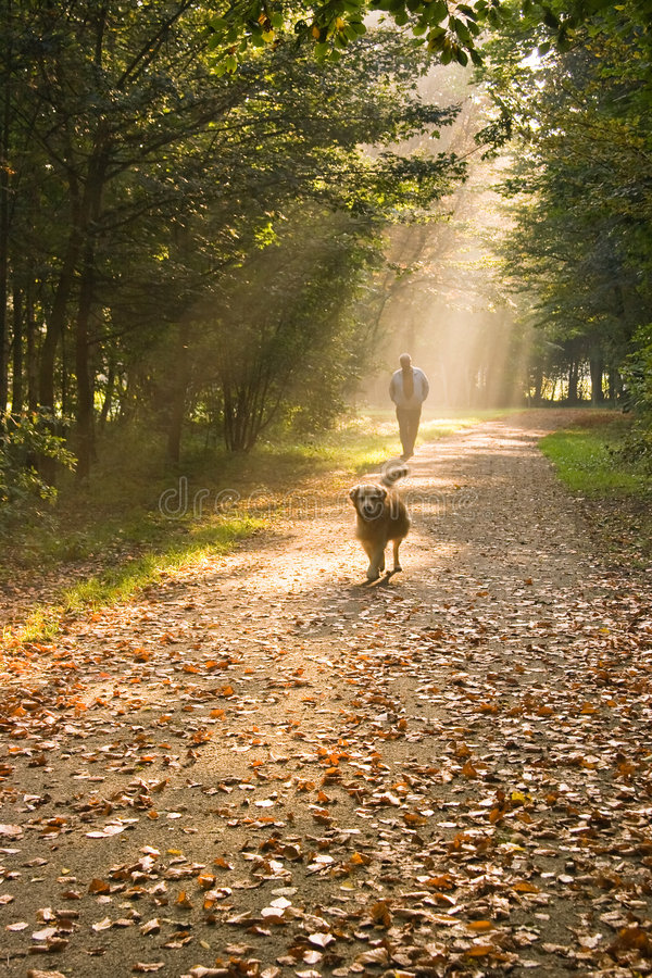 Man and dog. A man and his dog walking in the forest on a sunny and misty autumn morning royalty free stock image