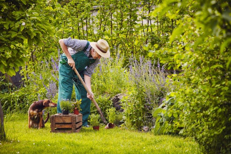 Man dog gardening work stock photo Image of spring overlocking