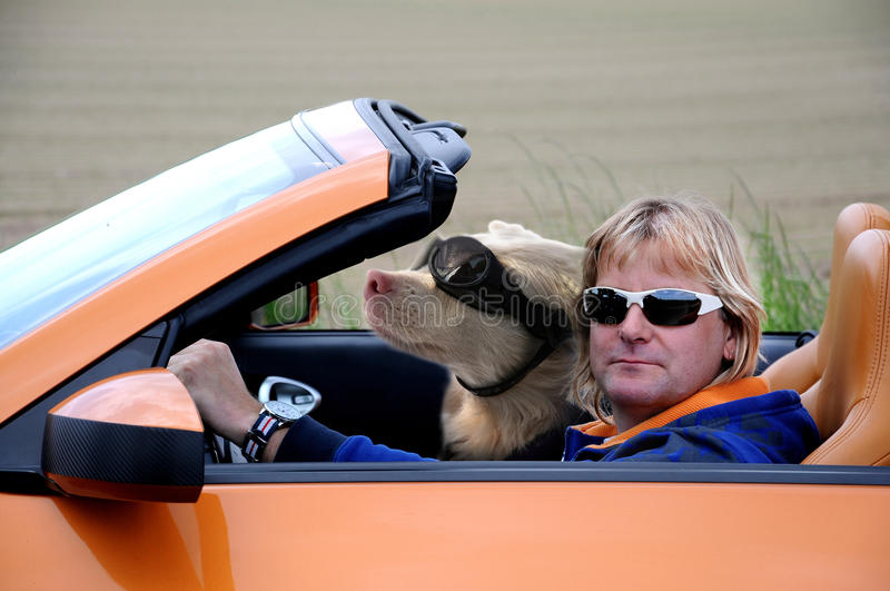Man and dog riding a sports car. Blond sportive man and his dog riding in cabriolet. Both wearing sunglasses stock images