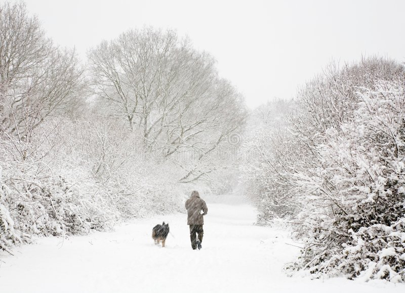 Man and dog in snow. Man walks his dog in snow covered woods in winter royalty free stock images
