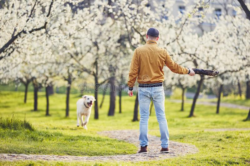 Man with dog in spring public park stock photography