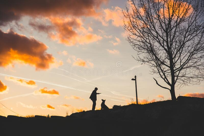 Man and dog together in sunset light, beautiful photo, man and friends. High Quality Photo. Natural Light royalty free stock photography