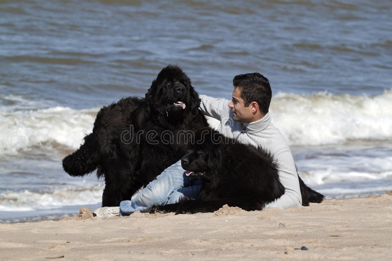 Download Man And Is Dogs In The Beach Stock Photo - Image: 18870892