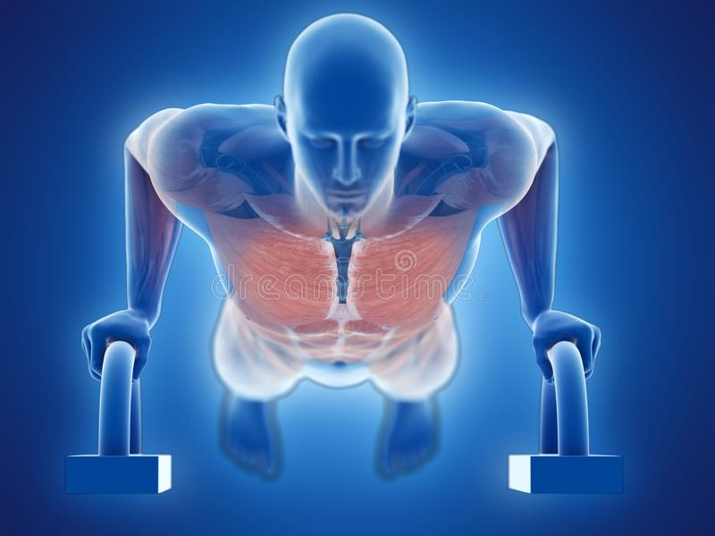 A man doing pushups. 3d rendered medically accurate illustration of a man doing pushups stock illustration