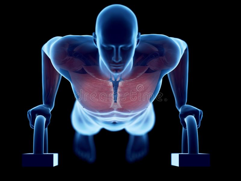 A man doing pushups. 3d rendered medically accurate illustration of a man doing pushups royalty free illustration