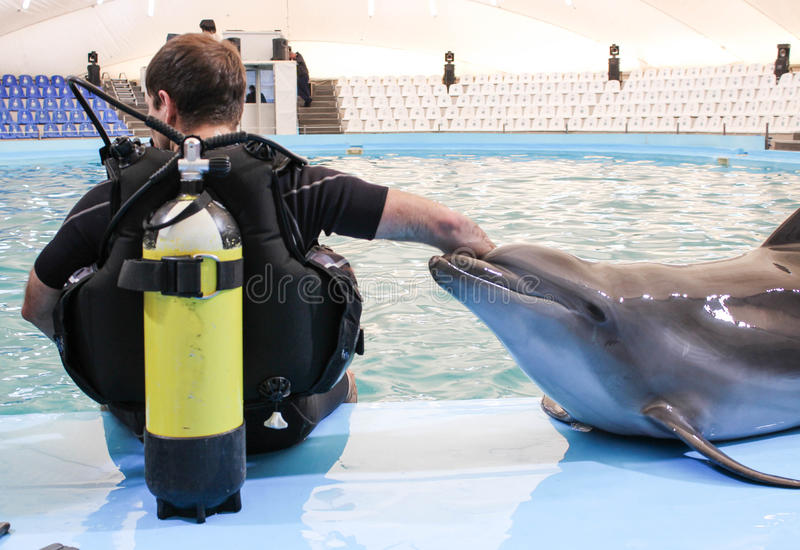 Man and dolphin preparing to sail together. Diving with dolphins. Diving with dolphins in the swimming pool stock photos