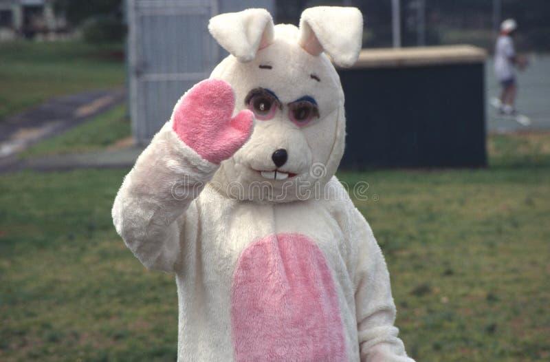 Easter bunny waves at the camera royalty free stock photos