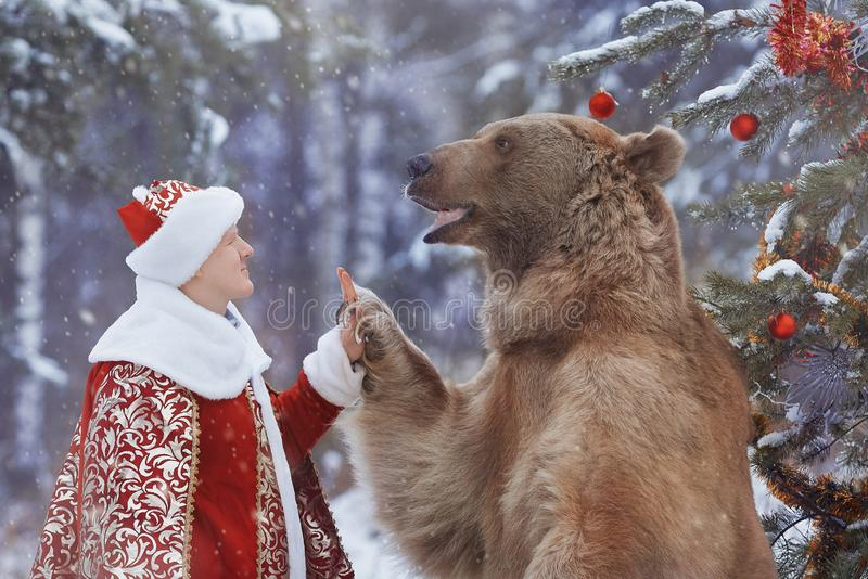 High five between man and brown bear royalty free stock photography