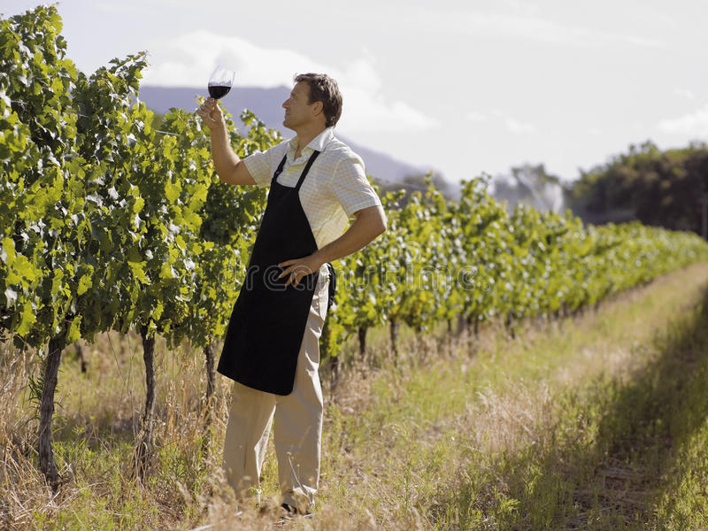 A man drinking wine at a vineyard stock photography