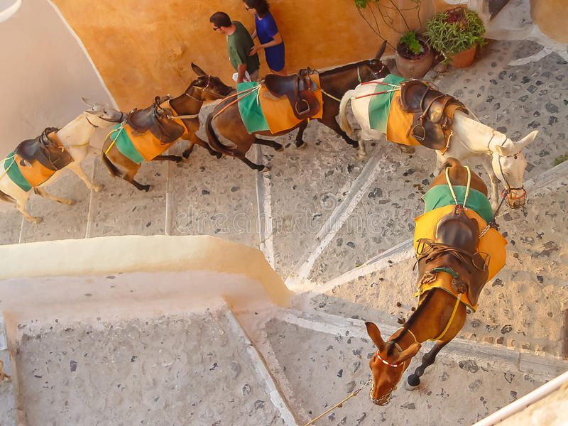 Man driving horses up steps in Santorini royalty free stock photography
