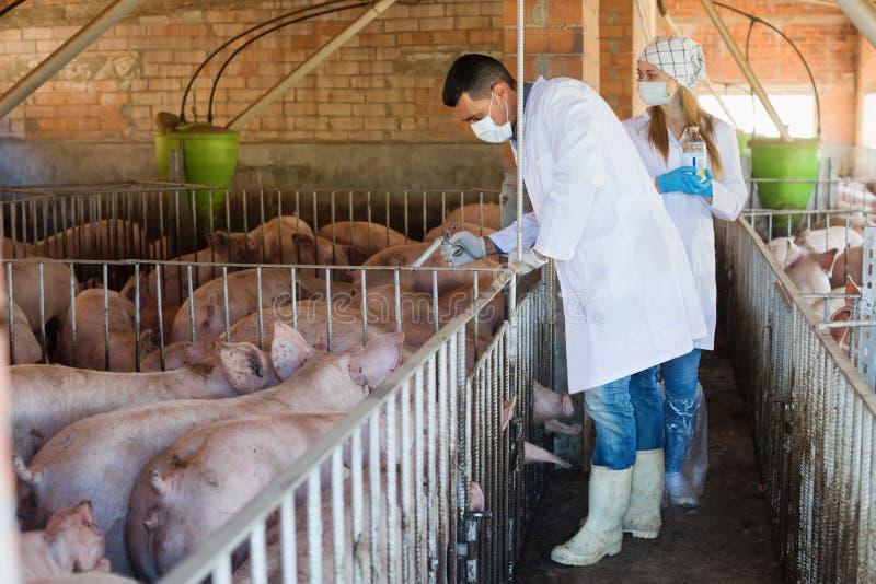 Man en vrouwendierenartsen om injectie te maken stock afbeelding