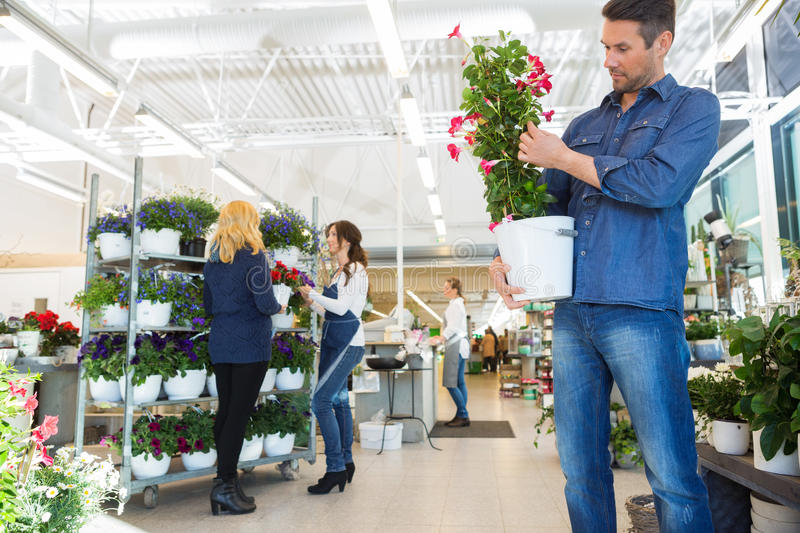 Man Examining Flower Plant In Shop stock photography