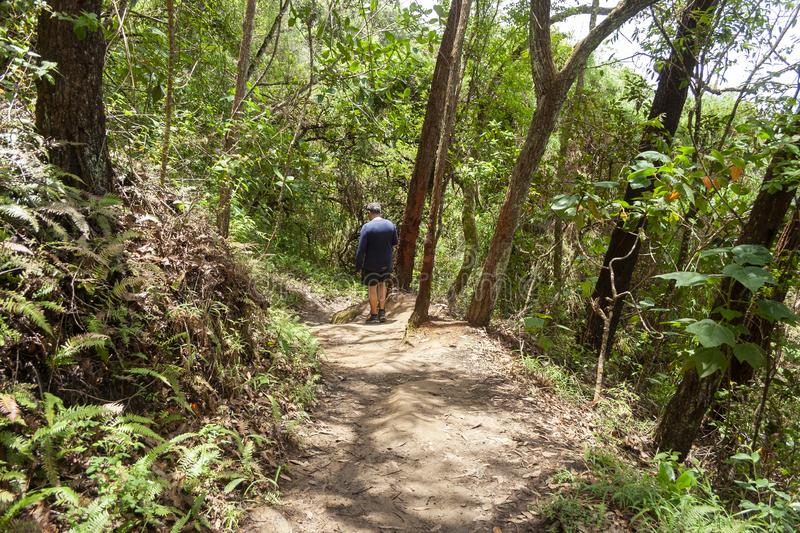 Man exercising doing mountain trekking on one of the paths of Sabas Nieves, a place well known by visitors to the Avila mountain o stock photo