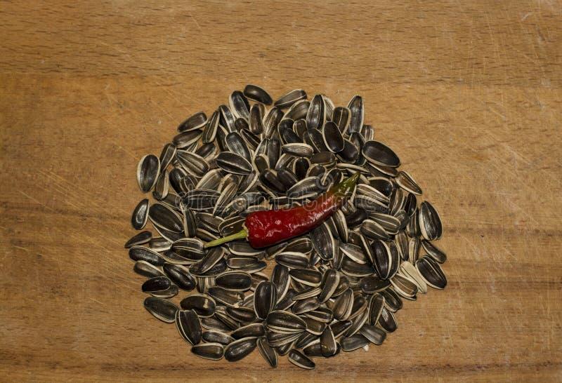 Man för varm peppar för solrosfrö vård- royaltyfri foto