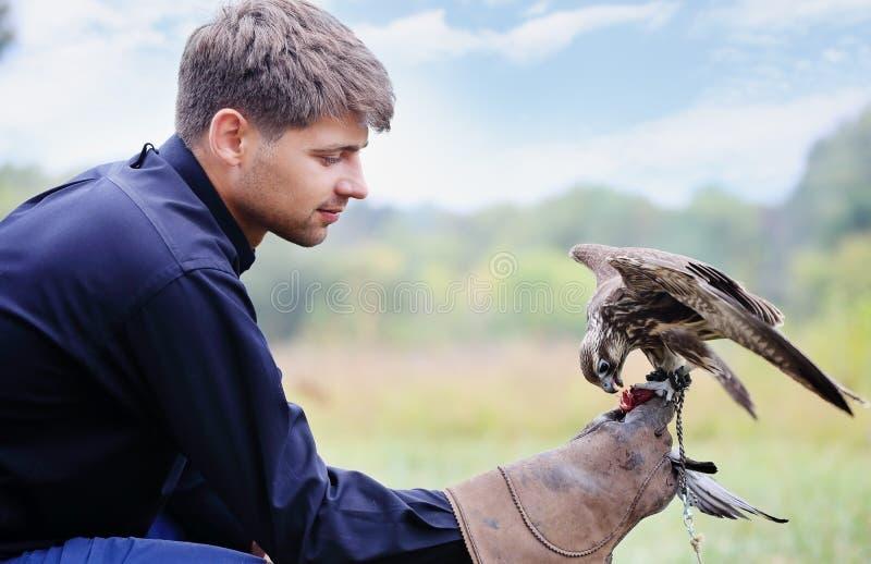 Man falcon feeds royalty free stock photos
