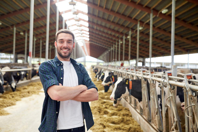 Man or farmer with cows in cowshed on dairy farm. Agriculture industry, farming, people and animal husbandry concept - happy smiling young man or farmer with stock photos