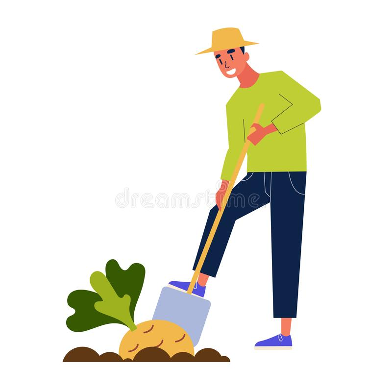 Man farmer harvesting. Guy with a shovel dig. Harvest. Agriculture and farm, life in the country. Isolated vector illustration in cartoon style royalty free illustration