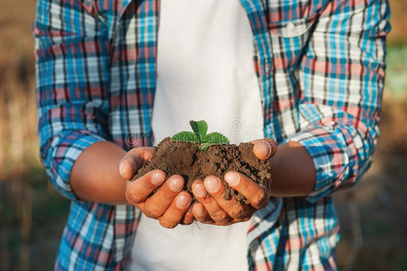 Man farmer holding young plant in hands against spring background. Earth day Ecology concept. Close up selective focus on Person h royalty free stock photos