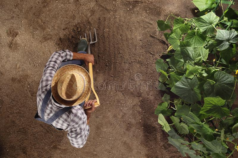 Man farmer working with pitchfork in vegetable garden, dig the s royalty free stock photo