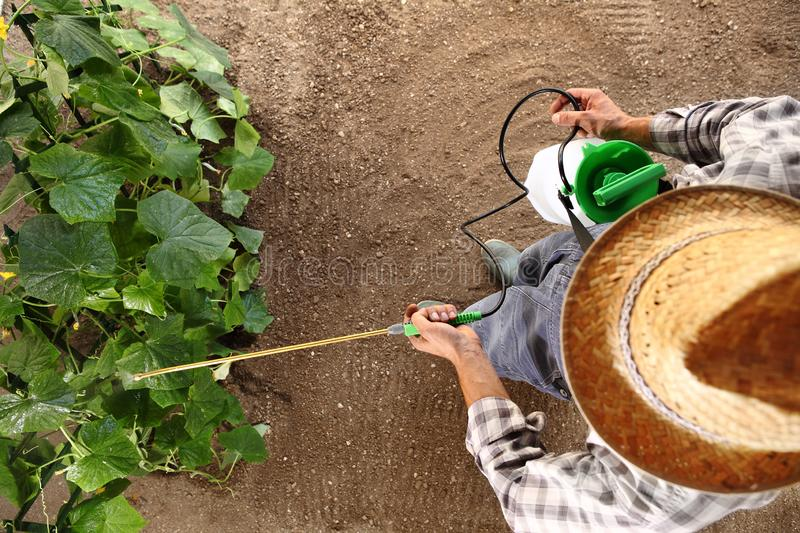 Man farmer working in vegetable garden, pesticide sprays on plan royalty free stock photography