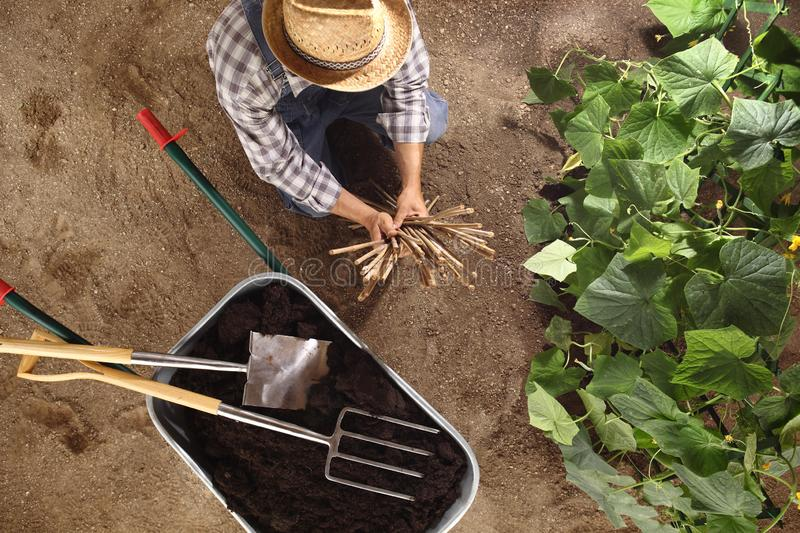 Man farmer working in vegetable garden, wheelbarrow full of fer royalty free stock images