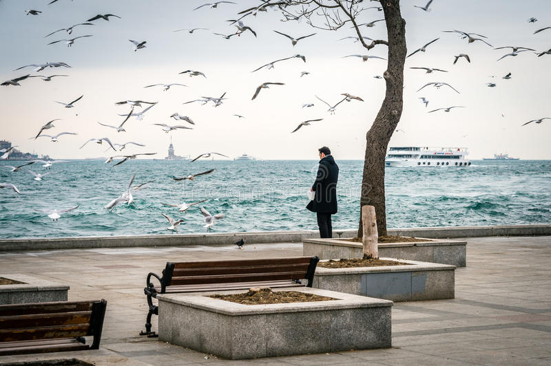 Man feeding birds in Besiktas, Istanbul royalty free stock photo