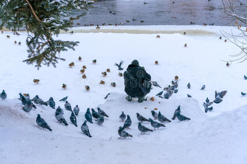 A man is feeding doves and ducks on the frozen river bank in a small old town in winter royalty free stock image