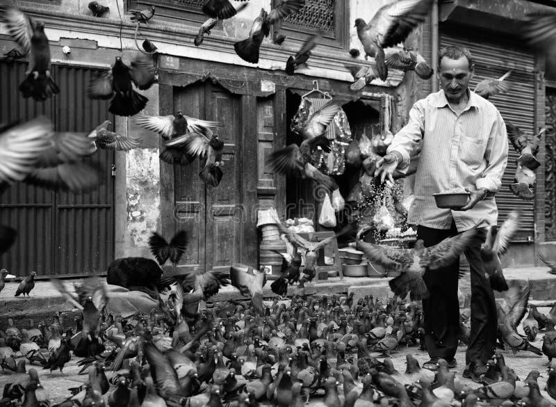 Man feeding pigeons royalty free stock photos