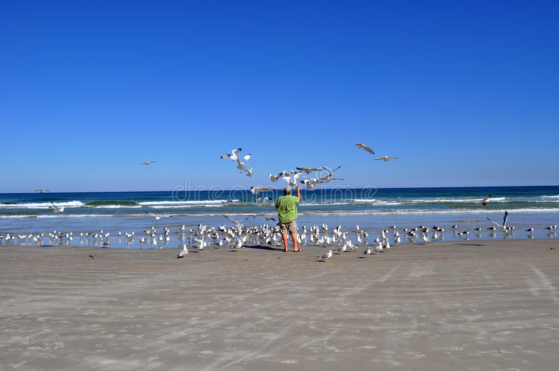 Man feeding seagulls stock image
