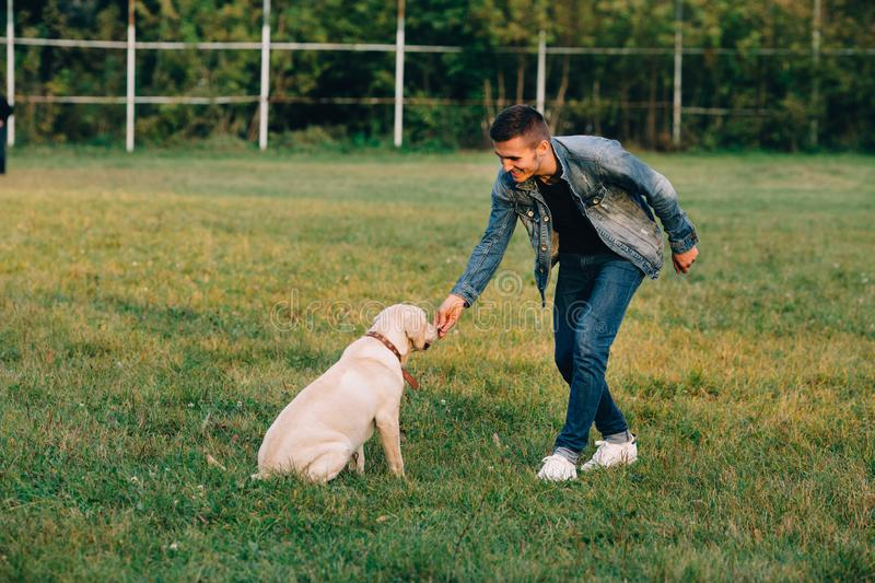 Man feeds his dog labrador snacks for obedience. Training dog in park royalty free stock photo