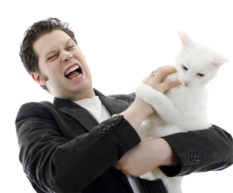 Man fighting with white cat. Isolated on white stock photography