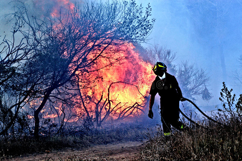 A man fights the fire. Civitavecchia Rome Italy a fire officer is disappointed after fighting fire in a fire of a completely destroyed Mediterranean pine forest stock photography