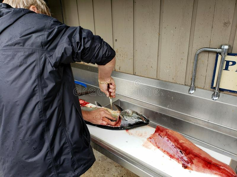 Man filleting salmon. On white cutting board in fish station stock image