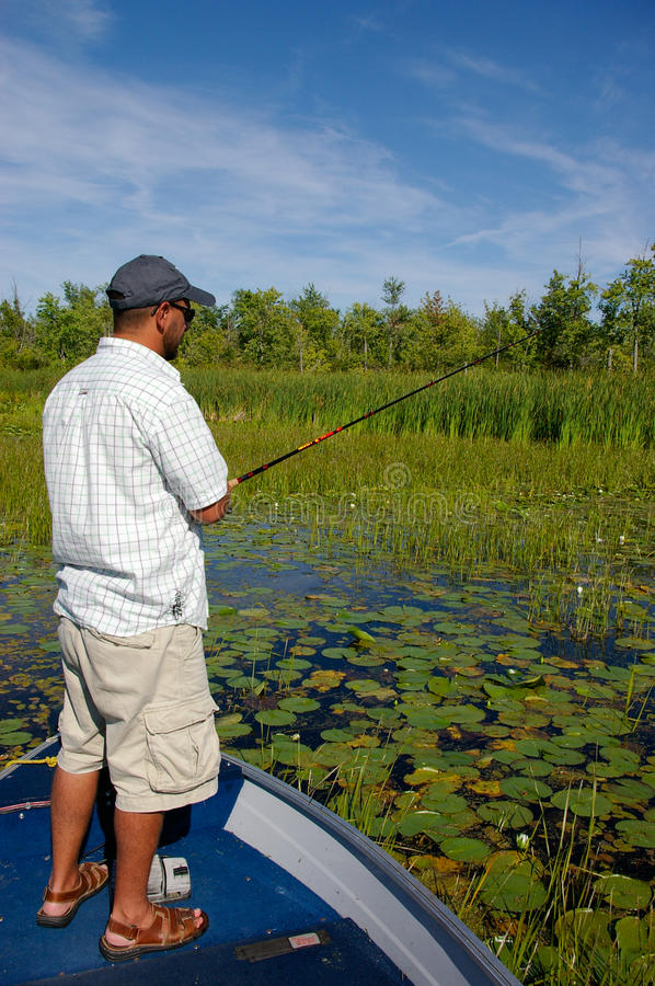 Man Fishing for Largemouth Bass. A man fishes lilly pads for largemouth bass royalty free stock image