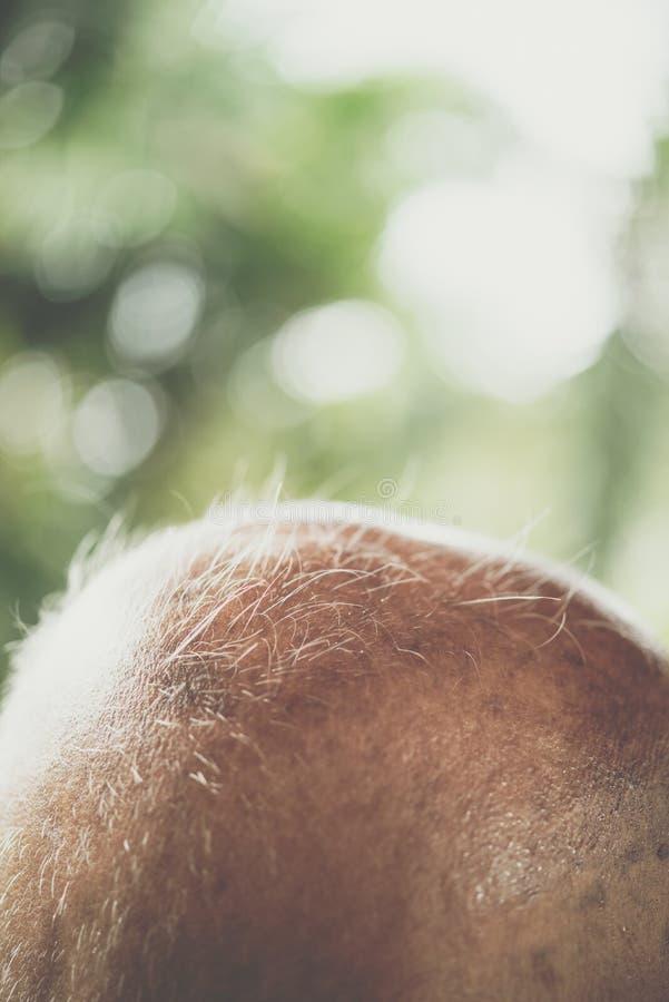 Man flintskallighet från rakninghår på grund av hårförlust arkivfoto
