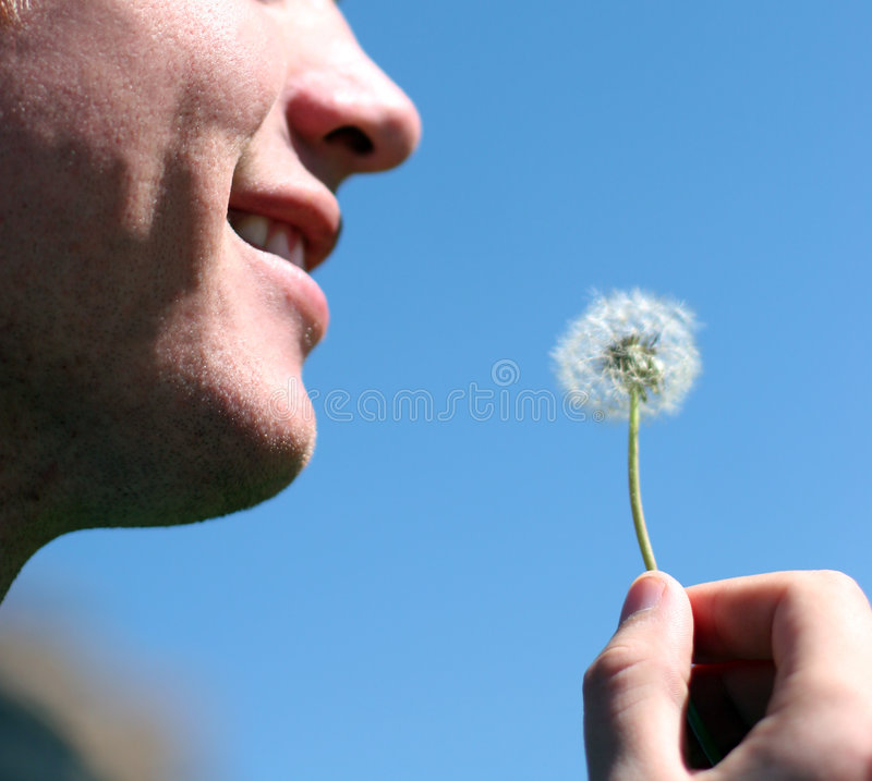 Man and flower royalty free stock photos