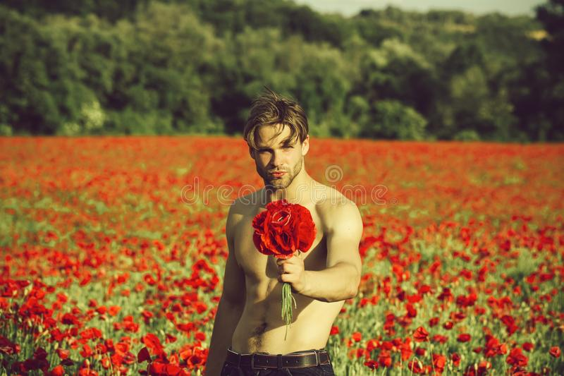 Man with flowers. guy with muscular body in field of red poppy seed stock image